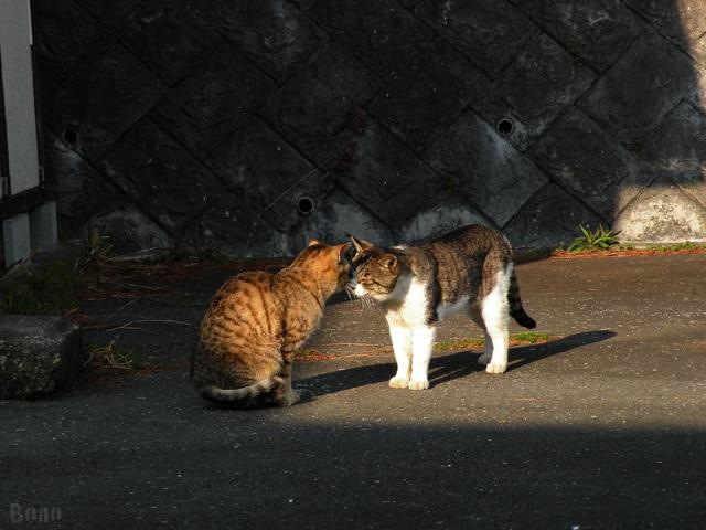 111213-cats1c.jpg