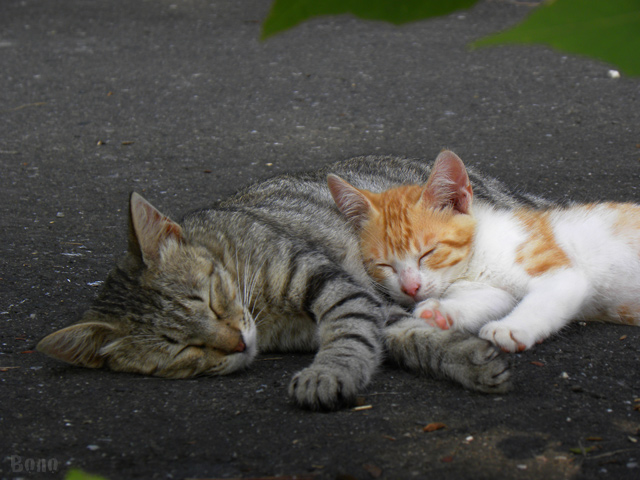 111213-cats2b.jpg