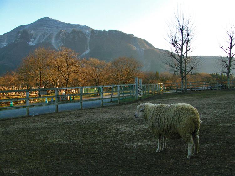 111229-sheep1.jpg